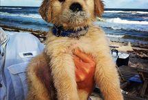 puppy love / by Michele Buddo
