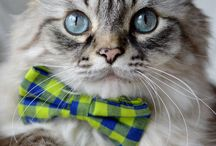 Cats in bowties