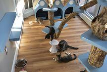 Cat Playroom ideas