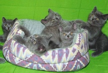 Cats And Kittens / by Thomas Byers