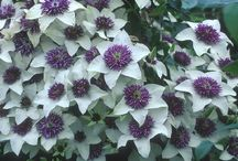 Plants and flowers for your garden / Gardening