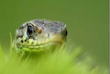 Snakes, Lizards & Mice / by Adeline Nobel