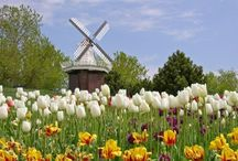 Netherlands / by Cheryl Gubitosi