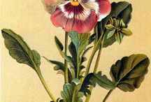 botanische prenten, illustraties