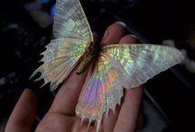 Mariposas#