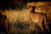 Beautiful Africa / Discover Africa's stunning nature, captivating wildlife and warm and friendly people...