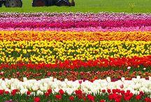 四季の色変化 / 旅で知る四季のある日本の美しい景色