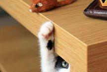 Cats / by Halin Vig