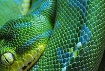 z Animals Reptiles