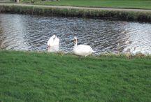 """Wilde dieren / """"Wilde"""" dieren die in de Krimwijk te Voorschoten gezien zijn. Bijvoorbeeld vogels een regenworm, slakken etc."""