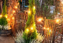 Jouluisia ideoita - Ideas for Christmas / Garden plants and decorations for a beautiful Christmas.