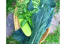 Grow Your Own / 80% of food in the US is wasted. Reduce your food waste footprint by growing your own vegetables , regrowing food from vegetable scraps and shopping at local farmer's markets.
