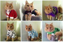 ropa gatos