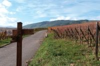 Walking and Active Wine Holidays