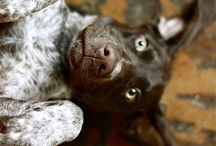 Dogs / by Jennifer Jeter
