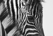 Animal photos / by Emily Gallagher