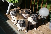 It's a Pug Thing... / by Ellen Bernardino