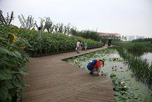 ecological park