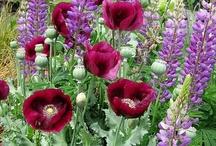 Beautiful Flowers / by Vivien Segedin