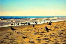 My beach pics!