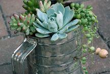 Home Decor & Gardening ideas....