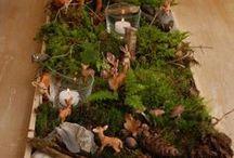 Wald projekt