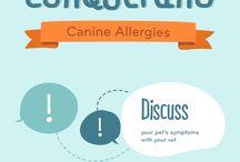 Здоровье домашних животных