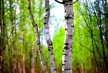 краски леса