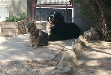 Mes chiens et mon chat / Www.dudomainedesmalices.com