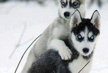 mon amour des animaux.