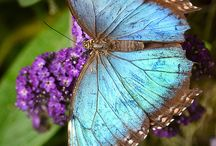 BUTTERFLIES / by Michelle Rizzo