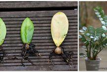 Idee: Pflanzen