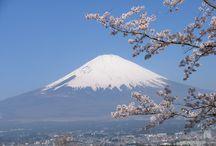 富士山&サクラ (cobachiyann) / 自然体&自遊人