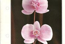 dicas de flore