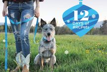 12 Days of #RCPets / This holiday season RC Pet Products will be delivering donations to 12 Lower Mainland charities. We'll share their stories here.