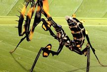 Special / Insects