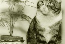 Foto: Cani gatti e altri amici / Animali per lavoro e per compagnia nelle foto dell'Archivio Fotografico della Biblioteca Malatestiana