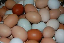 Double M Farms Eggs