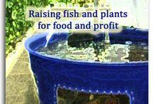 My Urban Farm: Someday Aquaponics