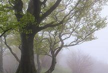 Mist and foggy days