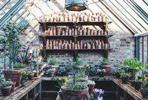 szklarnia / greenhouse