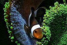 aqua n fish