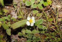 Photos of Rosaceae
