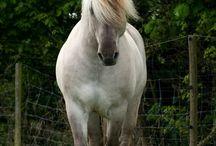 paarden fjorden