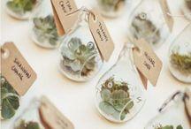Succulents ❤