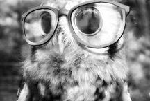 o.o Love Owls o.o