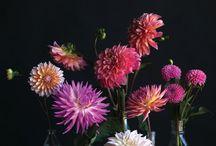 Flowers / by Belinda Herbert