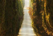 ~pathways~