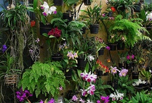 Orchid displays