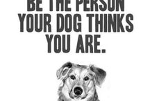 QUOTES Pets